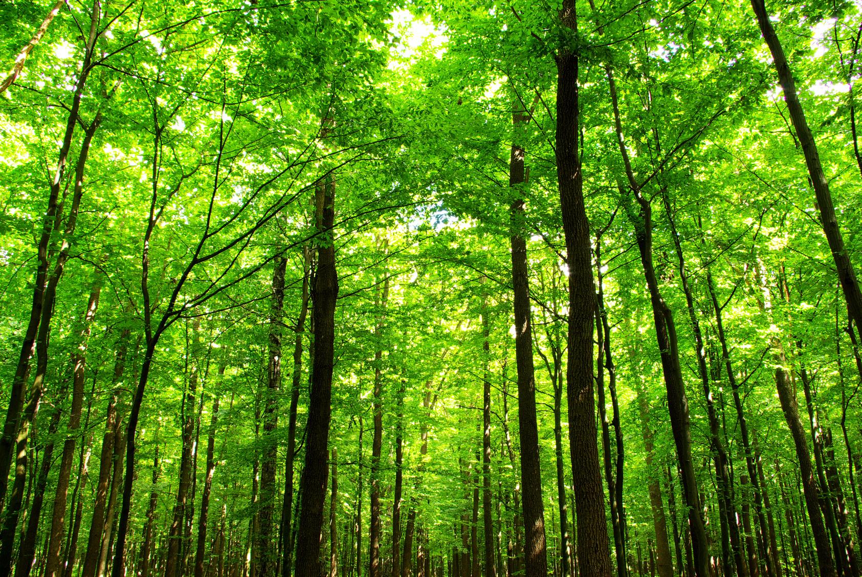 Curso Técnico em Florestas | Central Pronatec