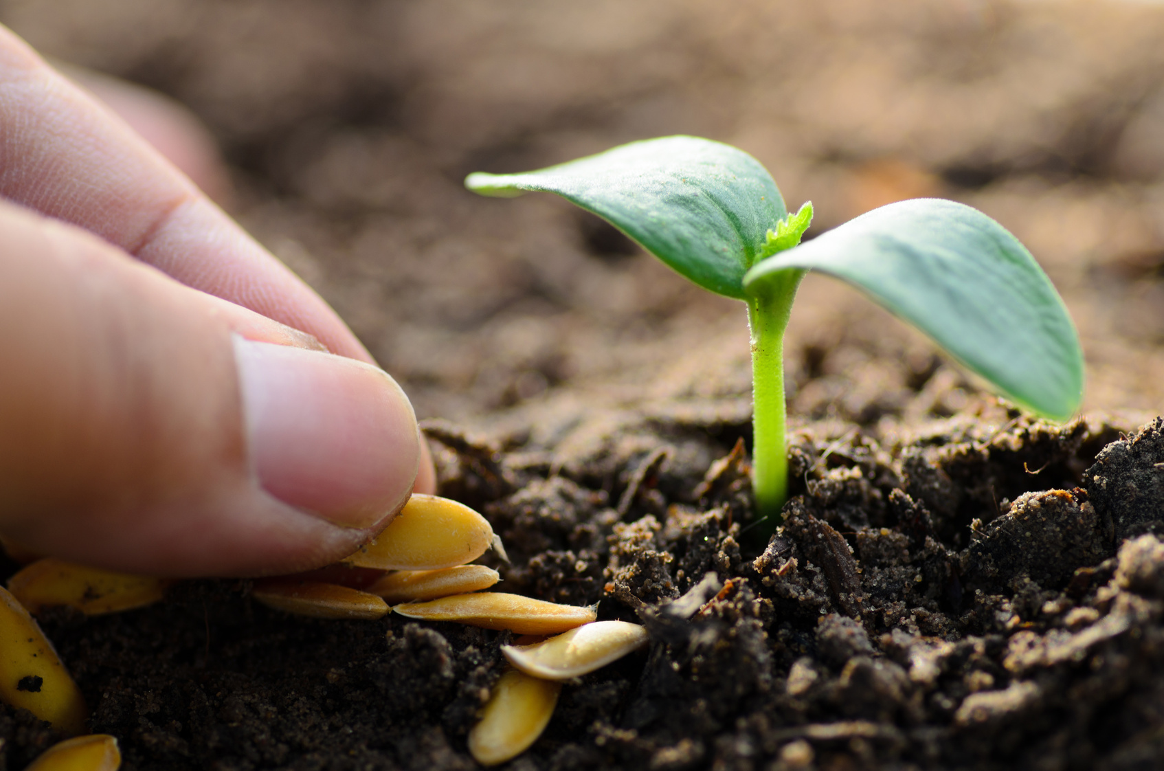Curso Técnico em Agricultura   Central Pronatec